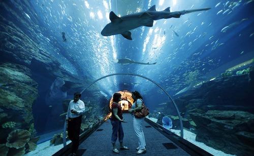 dubai-aquarium-a-underwater-zoo4